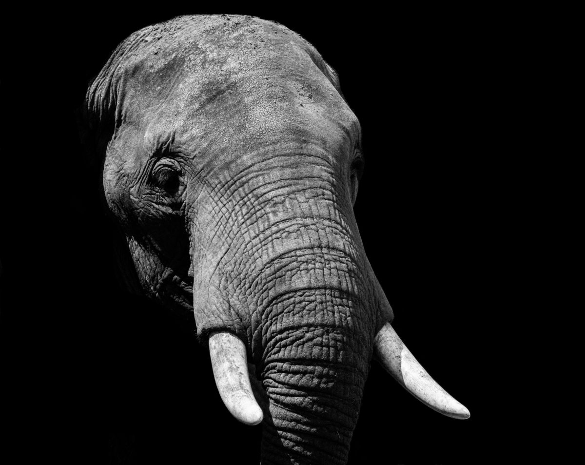 Elephants Have Long Memories. So Should You.